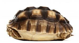 Turtle culture change resistance avoidance organisation